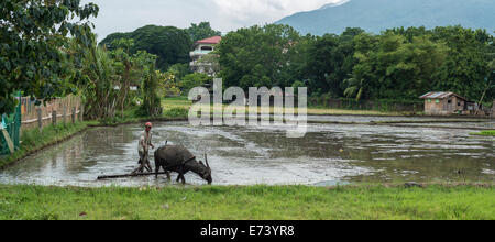 Farmer working in the rice fields - Stock Photo