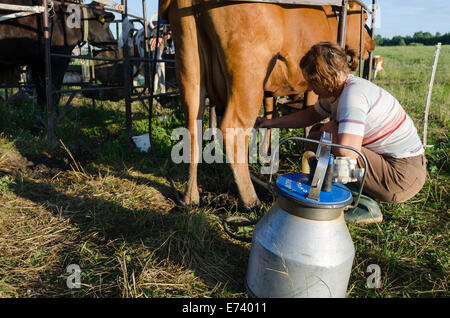 Inquiry putting hand in a cows ass think, that