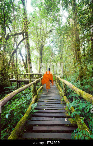 Buddhist monk at wooden bridge in misty tropical rain forest. Sun beams shining through trees at jungle landscape. - Stock Photo