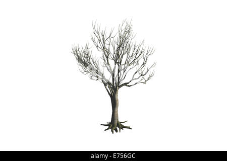 Dead tree, isolated on white background. - Stock Photo