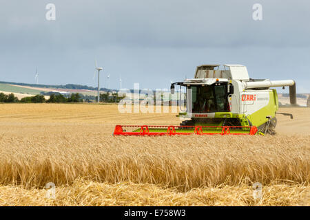 Claas combine harvester harvesting barley with wind turbines in the background - Stock Photo
