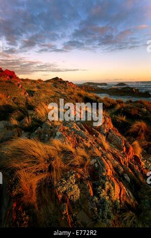 Rocky shoreline Tasmania Australia - Stock Photo