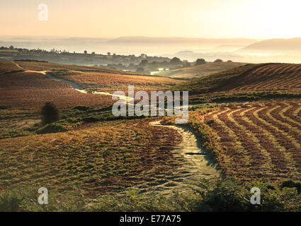 Bright dawn sunshine across misty upland landscape in Wales on The Begwns common near Hay on Wye - Stock Photo