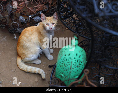 Stray cat sitting amongst metalwork in alleyways and markets of the medina or old town of Marrakesh - Stock Photo