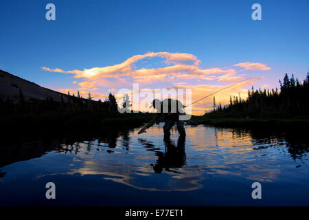Silhouette of fisherman fly fishing in the mountains of Colorado near the town of Boulder. - Stock Photo