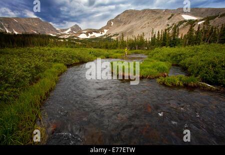 Fly fisherman in mountain stream near Boulder, Colorado, USA - Stock Photo
