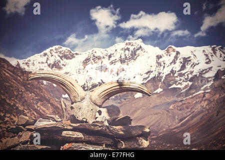 Vintage picture of yak's skull with Himalaya mountains in background, Nepal