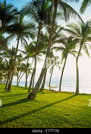 Hammocks hanging from palm trees over green grass on Maui along Pacific Ocean in bright sunlight - Stock Photo