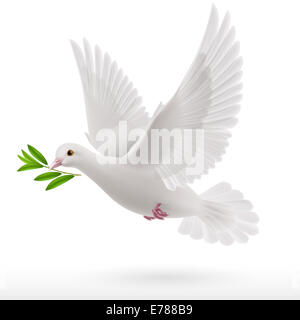 dove flying with a green twig in its beak - Stock Photo