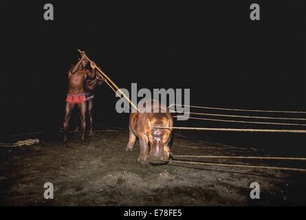El Molo Warriors/Hunters hunting hippopotamus with ropes and spears, El Molo Tribe, Lake Turkana - Kenya. - Stock Photo