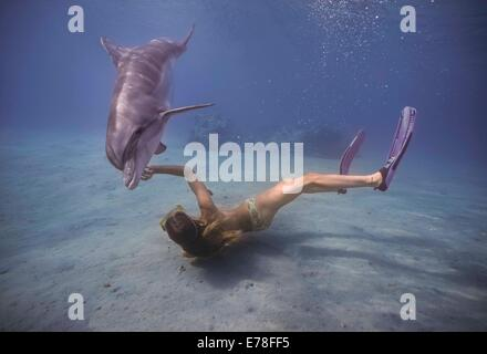 Dolphin trainer interacts with bottlenose dolphin (Tursiops truncatus). Dolphin reef, Eilat, Israel, Red Sea - Stock Photo
