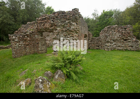Stone walls, part of old Roman bath house ruins, surrounded by trees near town of Ravenglass, Cumbria, England - Stock Photo