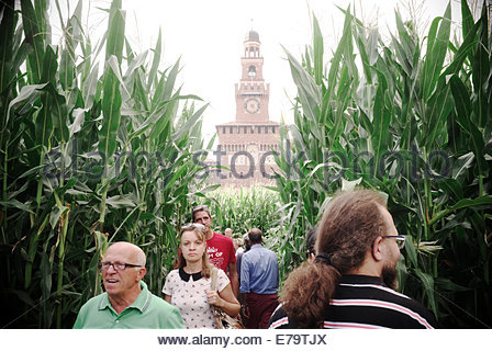 Sforza Castle provides a backdrop amongst a field of corn, an exhibit at Expo Gate, part of Expo Milano 2015. Milan, - Stock Photo