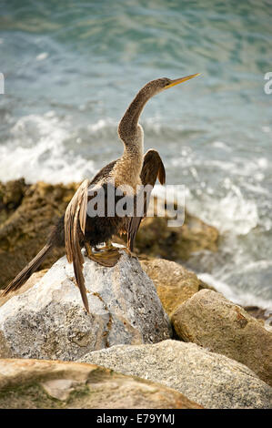 cormorant drying body in the sun - Stock Photo