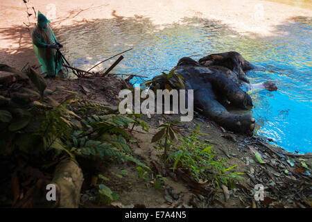 Calang, Aceh, INDONESIA. 8th Sep, 2014. ACEH, INDONESIA - SEPTEMBER 11: A wildlife conservation personnel photographs - Stock Photo