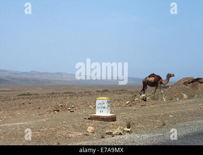 Street sign and camel in desert against clear blue sky, Zagora Province, Morocco - Stock Photo