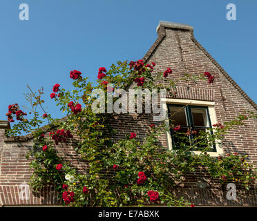 Flowering red roses in the historic city of Monnickendam, North Holland, The Netherlands. - Stock Photo