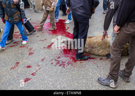 A sheep is ritually killed on the streets of Bijar, Iran, during the Day of Ashura. - Stock Photo