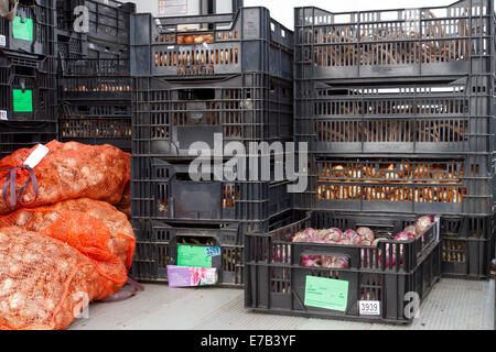 Harrogate, Yorkshire, UK. 11th Sept, 2014.  Crates of graden centre bulbs for sale being delivered to the Harrogate - Stock Photo