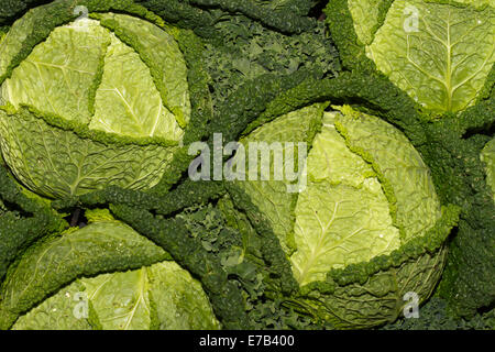 Harrogate, Yorkshire, UK. 11th Sept, 2014.   Cabbage at the Harrogate Annual Autumn Flower Show, attractions include - Stock Photo