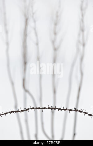 Barbed wire against a background of bare plants in winter - Stock Photo