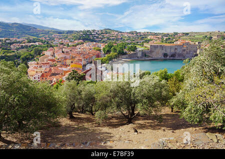 old Mediterranean village of Collioure with olive trees in foreground, Vermilion coast, Roussillon, Pyrenees-Orientales, - Stock Photo