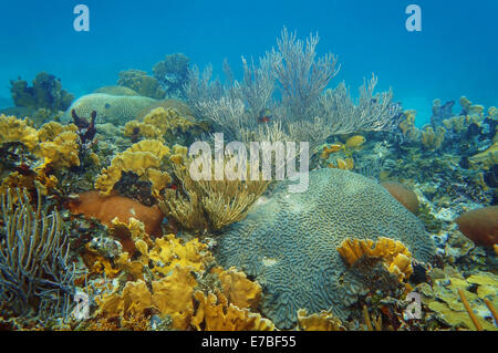 underwater landscape in an healthy coral reef of the Caribbean sea - Stock Photo