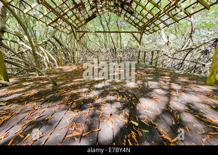 A bandstand in the mangrove forest of Petit Trou Lagoon near the Tobago Plantations Resort. - Stock Photo