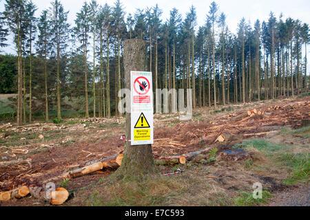 Tree felling forestry operations in Dartmoor national park, Bellever forest, Postbridge, Devon, England - Stock Photo