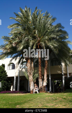 young man sitting in garden under a palm tree and taking photos at Karei deshe guest house and youth hostel, israel, - Stock Photo