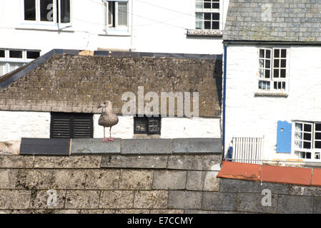 Seagull sitting on rooftop in traditional fishing village, Polperro, Cornwall, England - Stock Photo