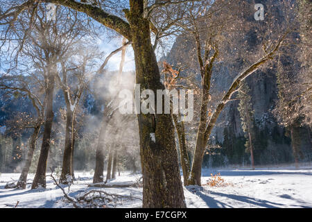 Early morning sunlight producing steam from frost and snow on trees, Yosemite National Park, California, USA - Stock Photo