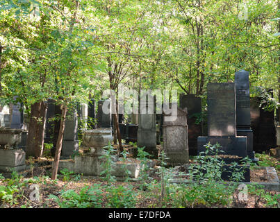Old gravestones among the trees in the Kozma Street Jewish Cemetery, Budapest, Hungary - Stock Photo