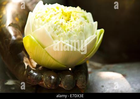 Buddha Hand With A Lotus Buddhist Hand Gesture Closeup Of Hand