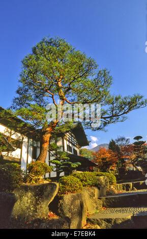JAPANESE HOUSE GARDEN AND FIR TREE