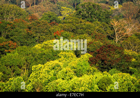 PERIYAR FOREST AND TREE DIVERSITY SOUTHERN INDIA - Stock Photo