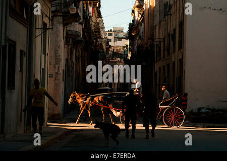A horse carriage in Havana, Cuba carries its passenger down a side street, into a beam of late afternoon sun. The - Stock Photo