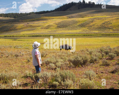 Image of mature woman watching North American Bison (Buffalo) while grazing in open prairie with Yellowstone River - Stock Photo