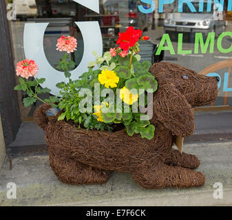 Unusual and humorous brown dog shaped container made from wire and coir with red flowering geraniums, pink verbena, - Stock Photo