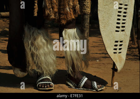 Eshowe, KwaZulu-Natal, South Africa, Amashoba, white tufts of cows tail leggings on legs of Zulu warrior in ceremonial - Stock Photo