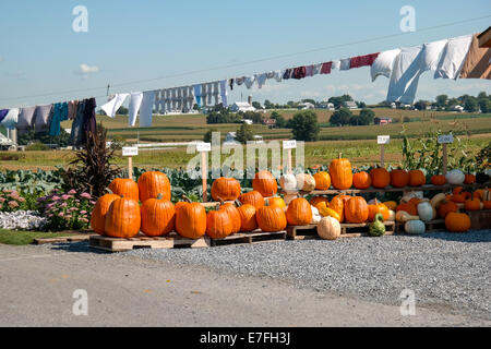 Pumpkins and gourds for sale along the roadside in Lancaster County PA. - Stock Photo