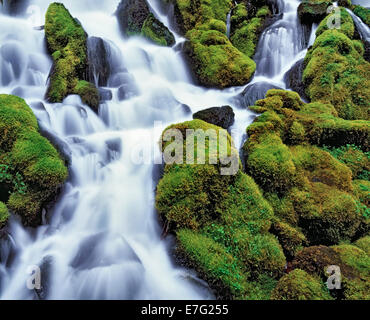 Clearwater Falls rushes over the moss covered rocks in Oregon's Umpqua National Forest and Douglas County. - Stock Photo