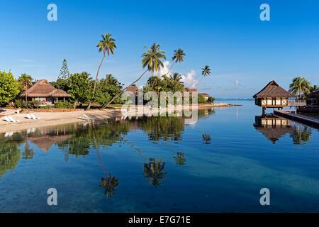 Bungalows, palm trees, lagoon, Moorea, French Polynesia - Stock Photo