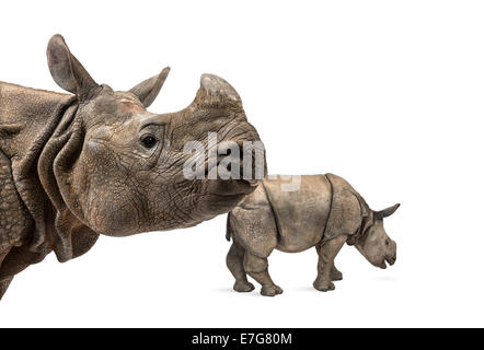 Indian rhinoceros mother and her baby in front of white background - Stock Photo