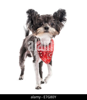 Crossbreed dog (1 year old) against white background - Stock Photo