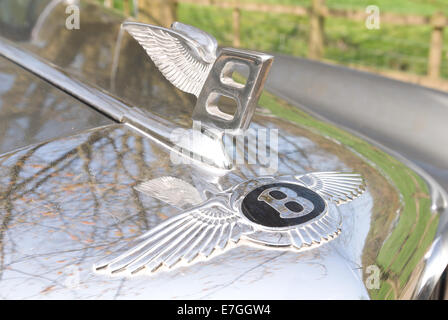 Winged Bentley logo emblem and metal badge on bonnet shiny silver car front classic collectors iconic symbol - Stock Photo
