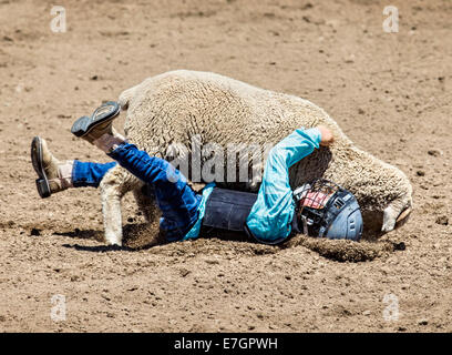 Young child riding a sheep in the mutton busting competition event, Chaffee County Fair & Rodeo - Stock Photo