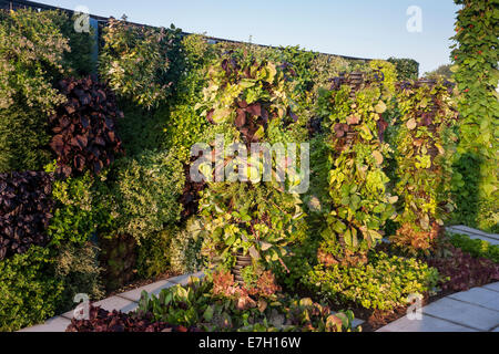 Garden - A Taste of Wythenshawe - living wall and towers of salad crops herbs and fruit - Designer - Reaseheath - Stock Photo