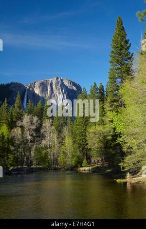 Tourists looking Yosemite Falls, from beside Merced River, Yosemite Valley, Yosemite National Park, California, USA