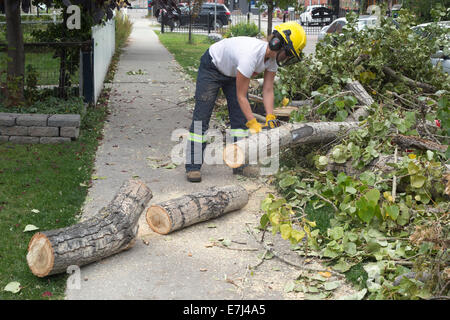 Calgary, Alberta, Canada, 18 Sep, 2014. Woman removes debris from sidewalk after heavy snowfall last week damaged - Stock Photo